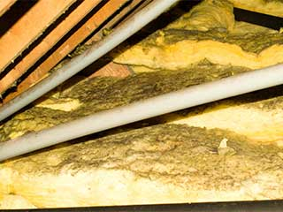 Insulation Removal | Attic Cleaning San Jose, CA